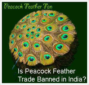 Peacock feather fan crafts in India